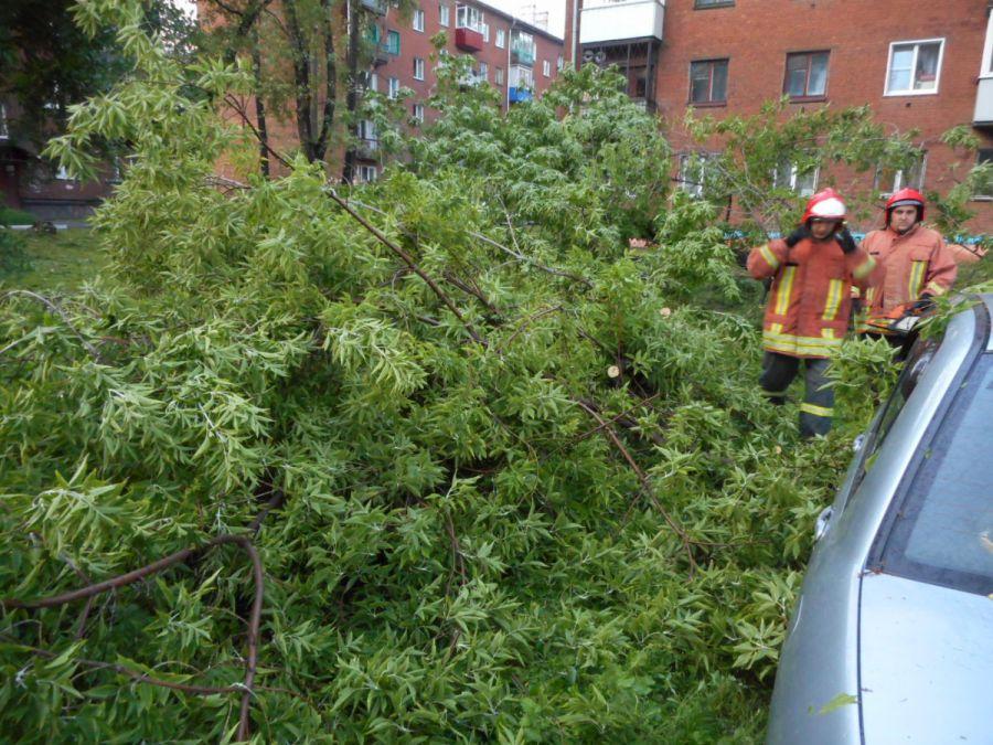 Новокузнецк | В Кузнецке дерево упало на машину (ФОТО ...: http://novokuzneck.bezformata.ru/listnews/kuznetcke-derevo-upalo-na-mashinu/48478866/