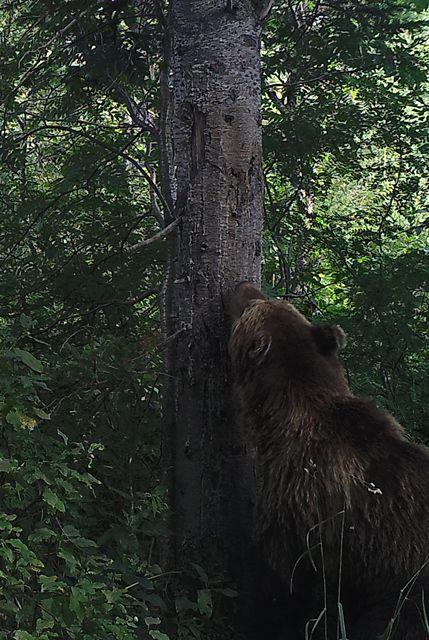 Фотоаппарат дмитрия медведева приятно